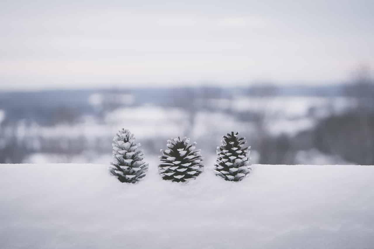 Ferie zimowe – ucz się i baw! Przyjemne z pożytecznym.
